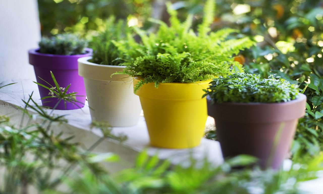 Forma tama o luz y color garden center navarro for Jardineria navarro
