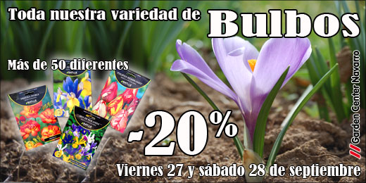bulbos_520