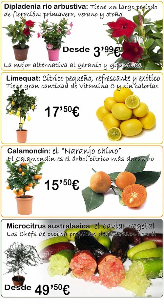 novedades_plantas_560