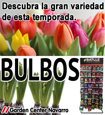 bulbos_web