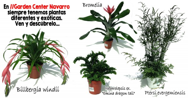 plantasdiferentes_fb